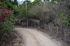 密林从农村小村庄路的风景视图向El伊甸园掠食性动物与阿诺德的电影的巴亚尔塔港墨西哥 免版税图库摄影