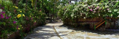密林从农村小村庄路的风景视图向El伊甸园掠食性动物与阿诺德的电影的巴亚尔塔港墨西哥 库存图片