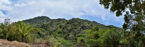 密林从农村小村庄路的风景视图向El伊甸园掠食性动物与阿诺德的电影的巴亚尔塔港墨西哥 免版税库存照片