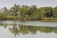 密林和河 图库摄影
