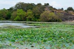 密林和湖, Srí Lanka 库存图片