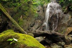 密林在中美洲 库存照片