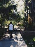 密林在加利福尼亚 库存照片