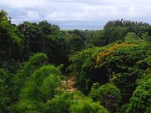 密林在毛里求斯 免版税库存图片