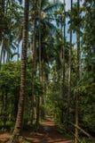 密林在热带香料种植园,果阿,印度 免版税库存照片