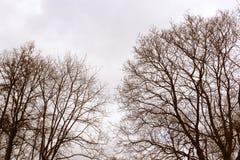密林在秋天冬天季节的林木视图与没有叶子的分支在多云天灰色天空自然葡萄酒的一个公园 免版税库存图片