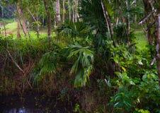 密林在越南 库存照片