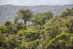 密林在阿雷纳尔,哥斯达黎加 库存图片
