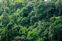 密林在巴厘岛 免版税库存图片