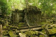 密林寺庙 库存图片