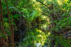 密林小河 库存照片