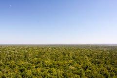密林或丛林地带在El Mirador贝登危地马拉附近 免版税库存照片
