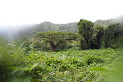 密林树 库存照片