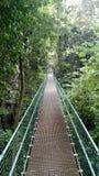 密林桥梁在Roatan 库存图片