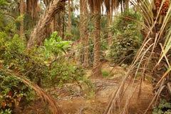 密林棕榈树 免版税库存照片