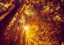密林森林秀丽自然风景背景 库存照片