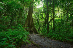 密林森林风景背景 免版税库存图片