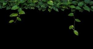 密林植物离开背景,心形的绿色黄色叶子 免版税库存图片