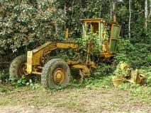 密林植被长满的被放弃的黄色平地机在尼日利亚和喀麦隆,非洲之间的边界附近 免版税库存图片