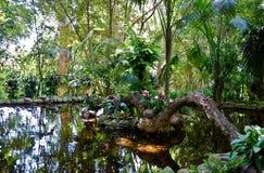 密林池塘风景 图库摄影