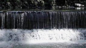 密林河小河从瀑布的 股票视频
