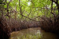 密林沼泽 图库摄影