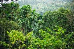 密林泰国 库存图片
