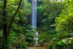 密林瀑布 免版税库存图片