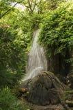 密林瀑布 库存照片