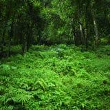密林热带森林狂放的风景 库存图片