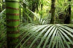 密林热带植被 免版税库存图片