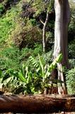 密林热带植被 免版税库存照片