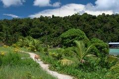 密林的美丽的景色在热带海岛 免版税库存图片