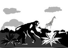 密林的黑白色图象 免版税库存照片