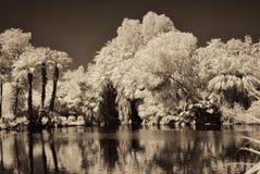密林盐水湖 库存图片