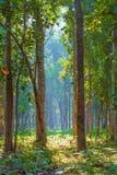 密林秀丽Buxa国家森林的 图库摄影