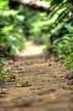 密林线索 库存图片