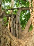 密林结构树 库存照片