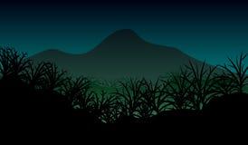 密林自然风景 免版税库存照片