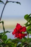 密林花和海滩 免版税库存照片