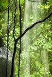 密林视图用落的水 免版税库存图片