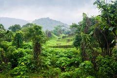密林越南 免版税库存照片