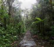 密林足迹在亚马逊雨林里 免版税库存图片