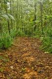 密林足迹,哥斯达黎加 免版税库存图片