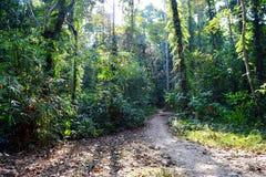密林足迹-道路穿过绿色树-热带森林在安达曼尼科巴群岛,印度 免版税库存照片