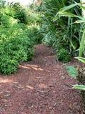 密林路径 免版税库存照片