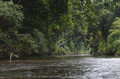 密林雨林 免版税库存照片