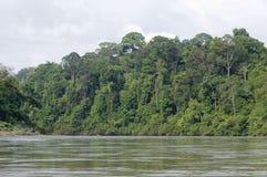 密林雨林 免版税库存图片