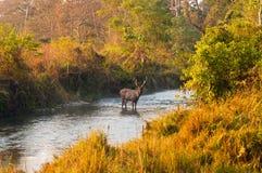 密林风景 免版税库存照片