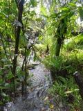 密林风景 免版税库存图片